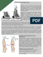 3-RESPIRACION ABDOMINAL.pdf