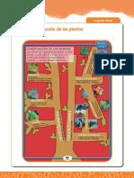 Recurso_Material Complementario Clasificación Plantas_03042012082421
