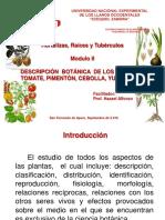 DESCRIPCIÓN  BOTÁNICA  DE LOS CULTIVOS  TOMATE, PIMENTÓN, CEBOLLA, YUCA Y PAPA