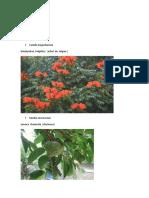Taxonomía de Plantas - Copia