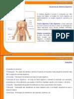 04_sistema_digestivo.ppt