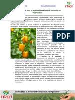 03. Aspectos Clave Para La Produccion Exitosa de Pimiento en Invernadero