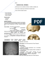 Anatomia Huesos Cráneo y Cara