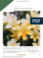 Plantarea Si Ingrijirea Florilor de Frezie