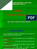 Control d Ciclo Celular y Meiosis 2009