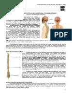 NEUROANATOMIA 02 - Macroscopia da Medula Espinhal - MED RESUMOS 2012.pdf