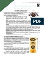 NEUROANATOMIA 03 - Microscopia da Medula Espinhal - MED RESUMOS 2012.pdf