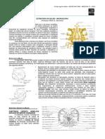 NEUROANATOMIA 05 - Microscopia do Bulbo - MED RESUMOS 2012.pdf