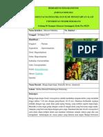 Herbarium Semarangense