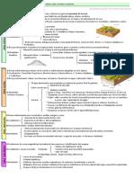 38743372-1-2-Esquema-guion-Variedad-litologica-dominio-siliceo-calizo-arcilloso-y-arcilloso-Relieves-de-erosion-diferencial.pdf