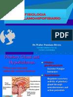 Hipotalamo Hipofisiario Fisiologia