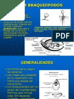 BRAQUIOPODOS PDF.pdf