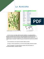 propiedades de La Achicoria en nutrición