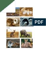 Diferentes Tipos de Animales