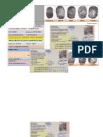 FORMATO DACTILOGRAMA monica.docx