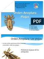 Orden Anoplura.pptx