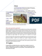 Lenguas Quechuas