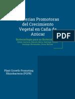 Bacterias Promotoras Del Crecimiento Vegetal en Caña de Azúcar