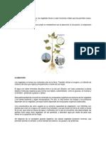 Fisiología de Las Plantas