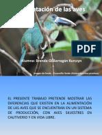 Alimentacion de La Aves