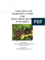 FAMU_Viticulture_Production Guide for Muscadines(3)