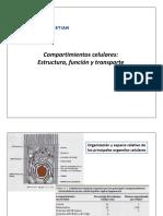 Clase 11 - Compartimientos Celulares