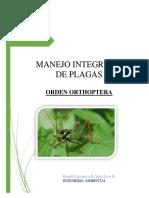 Cajamarca Loor Orthoptera