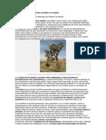 Adaptaciones de Las Plantas Xerófitas a La Sequía