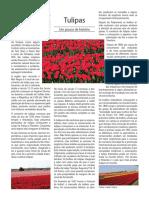 Historia Da Tulipa