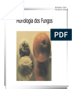 MorfologiadosFungos.pdf