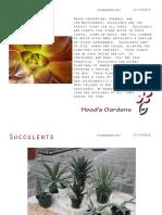 Succulents - Hood's Gardens