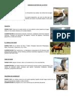 Franco Animales Nativos Del-La Costa Sierra Selva Mar Peru