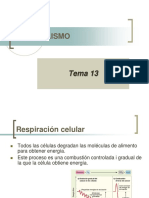 2 Respiracincelular 130223075033 Phpapp01