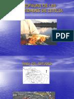 Presentación Sistematica Ictiologia Amazonica