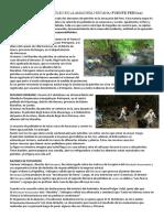 Derrames de Petróleo en La Amazonía Peruana