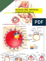 Embriología Gastrointestinal