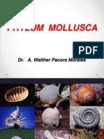 INVERTEBRADOS. 4. Moluscos