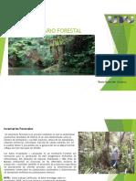Dif011 - El Inventario Forestal