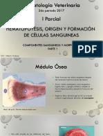 Hematopoyesis Vete 1er Parcial