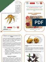 Diptico Cultivos Andinos_raices y Tuberc.