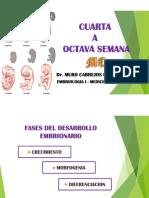 CUARTA A OCTAVA SEMANA.pdf