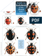 Guide Ladybird