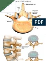 Skeletal System II