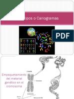 2 Biología 3 Cariotipos o Cariogramas