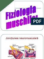 sinapse muschi1