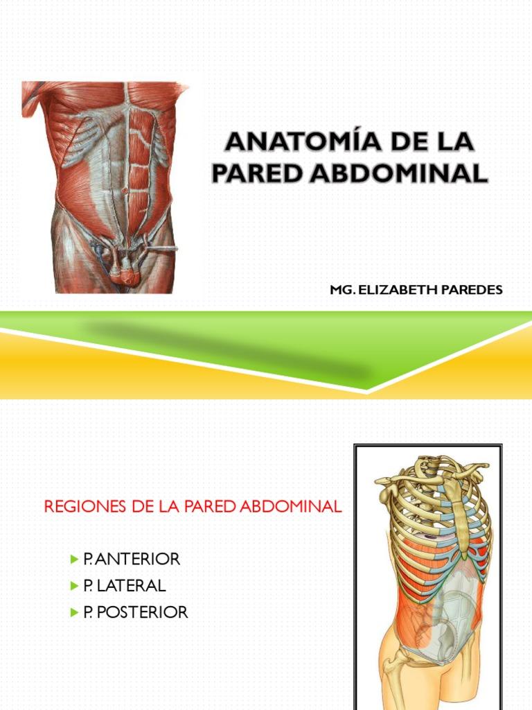 Anatomia PARED 3