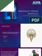 diencefalo y tronco encefalico