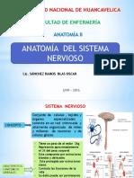 ANATOMIA Del Sistema Nervioso COMPLETO