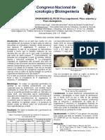 Micropropagación de Organismos Élite de Pinus Engelmannii, P. Arizonica y