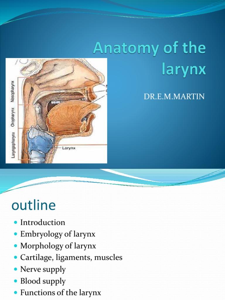 05 Anatomy Of Larynx Larynx Common Carotid Artery